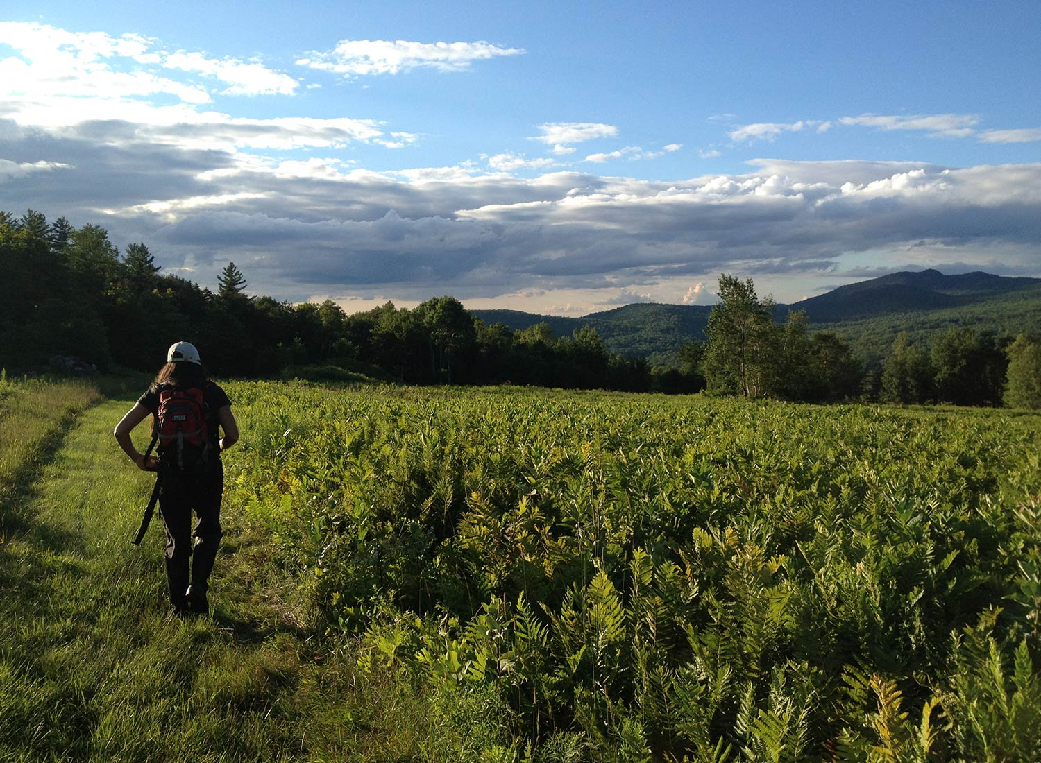 SHO Farm: vegan wild farming in a cold climate | shawn patrolling upper fields at dusk