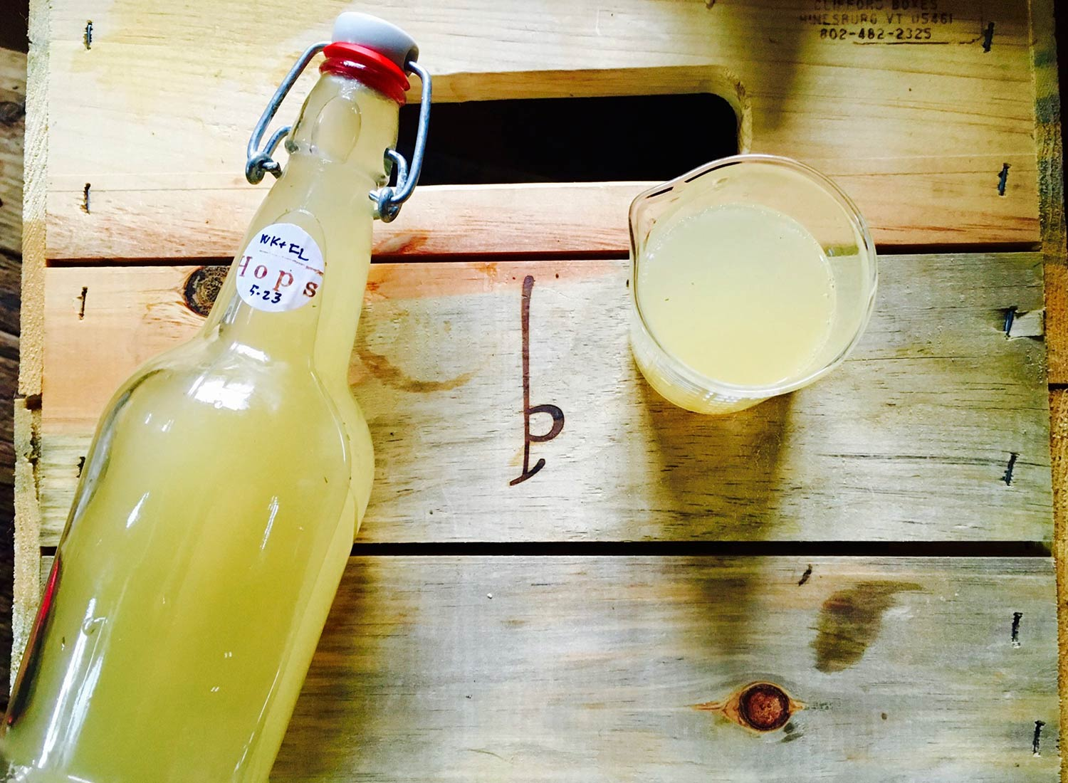 Food Lab at SHO: vegan gastronomy in a cold climate | wild hop-infused probiotic water kefir